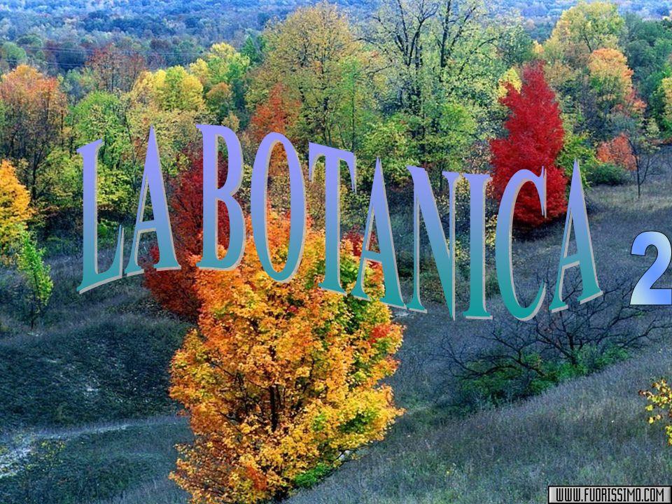 LA BOTANICA 2