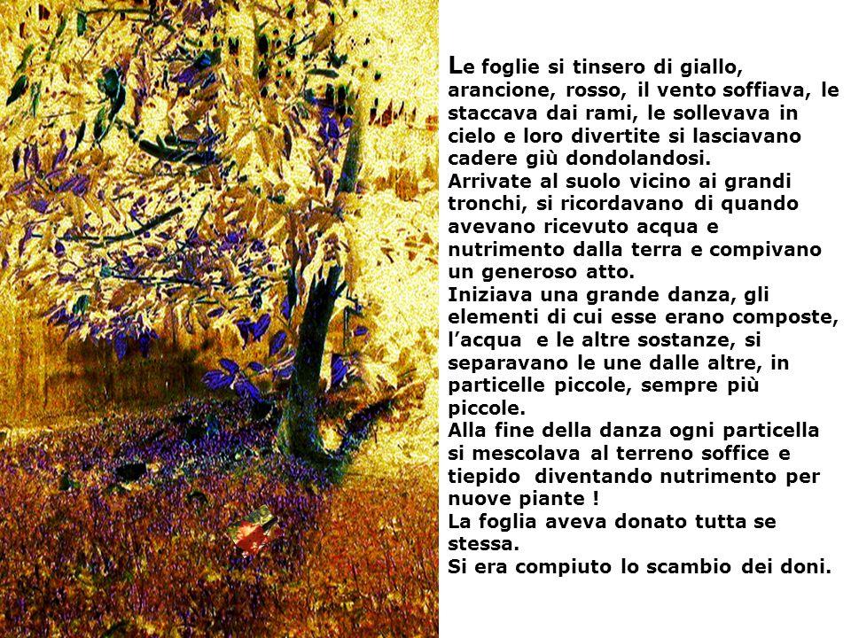 Le foglie si tinsero di giallo, arancione, rosso, il vento soffiava, le staccava dai rami, le sollevava in cielo e loro divertite si lasciavano cadere giù dondolandosi.