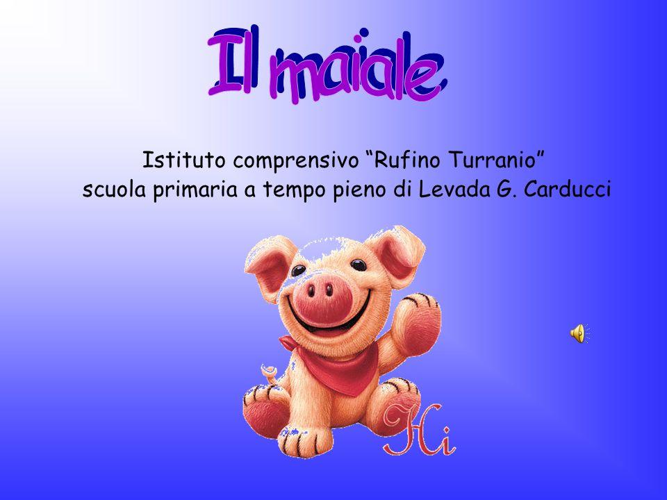 Il maiale Istituto comprensivo Rufino Turranio