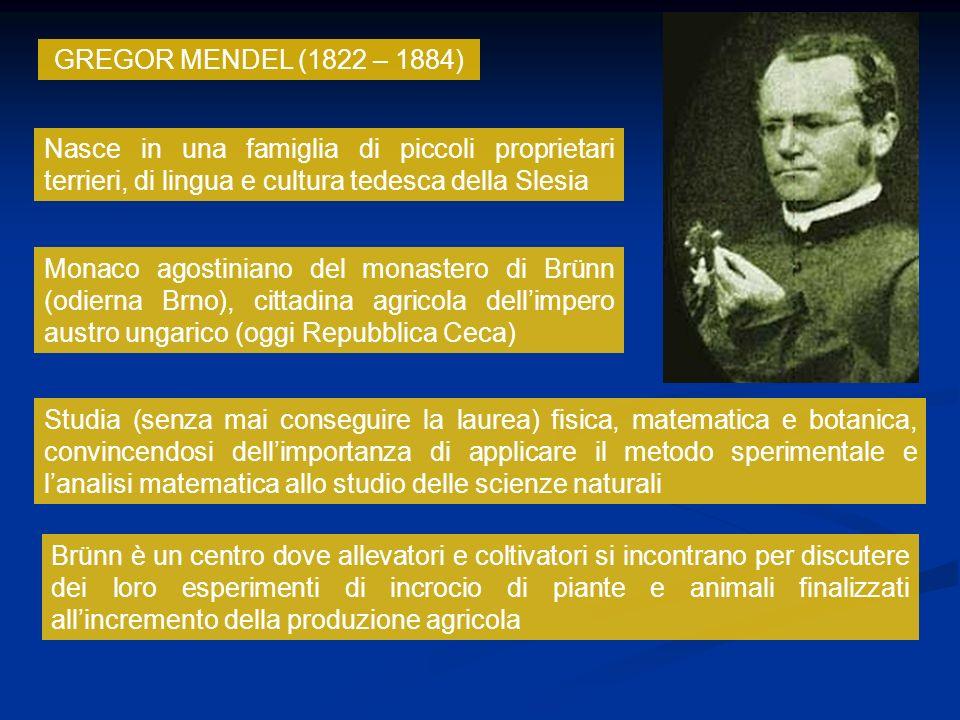 GREGOR MENDEL (1822 – 1884)Nasce in una famiglia di piccoli proprietari terrieri, di lingua e cultura tedesca della Slesia.