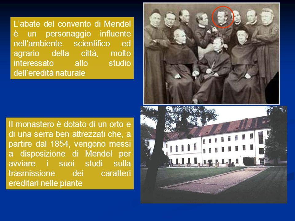 L'abate del convento di Mendel è un personaggio influente nell'ambiente scientifico ed agrario della città, molto interessato allo studio dell'eredità naturale