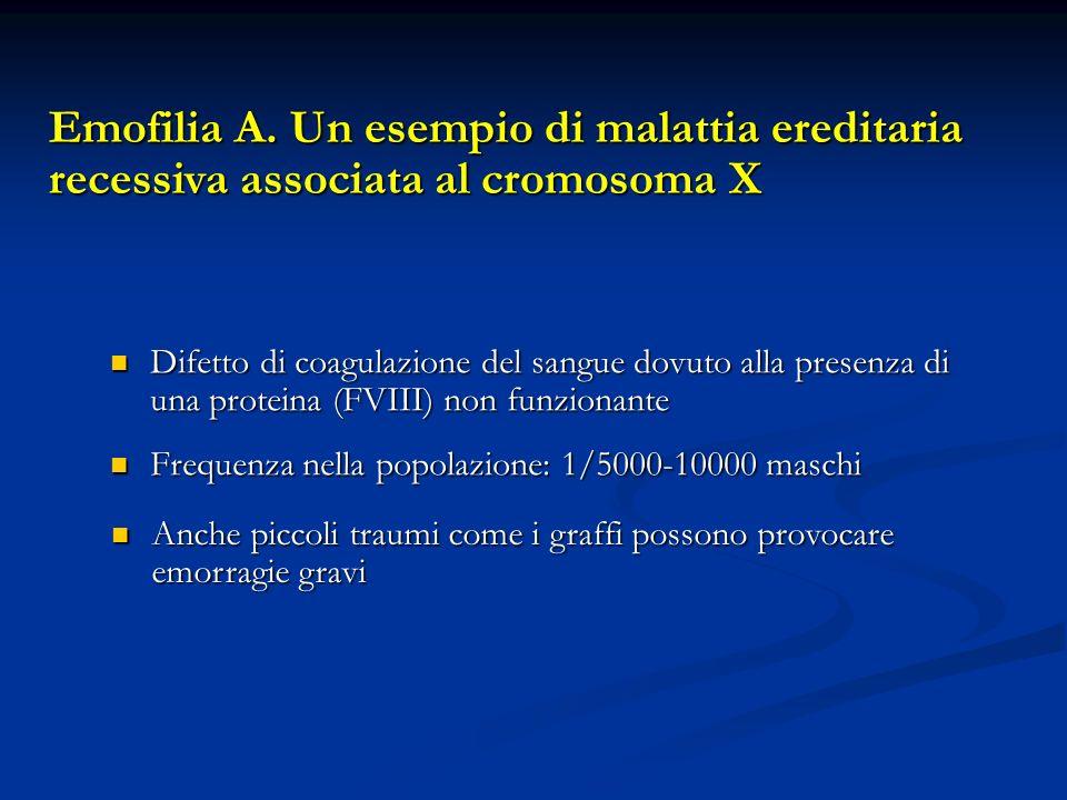 Emofilia A. Un esempio di malattia ereditaria recessiva associata al cromosoma X