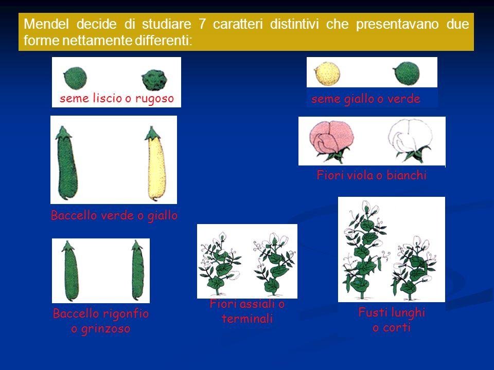 Mendel decide di studiare 7 caratteri distintivi che presentavano due forme nettamente differenti: