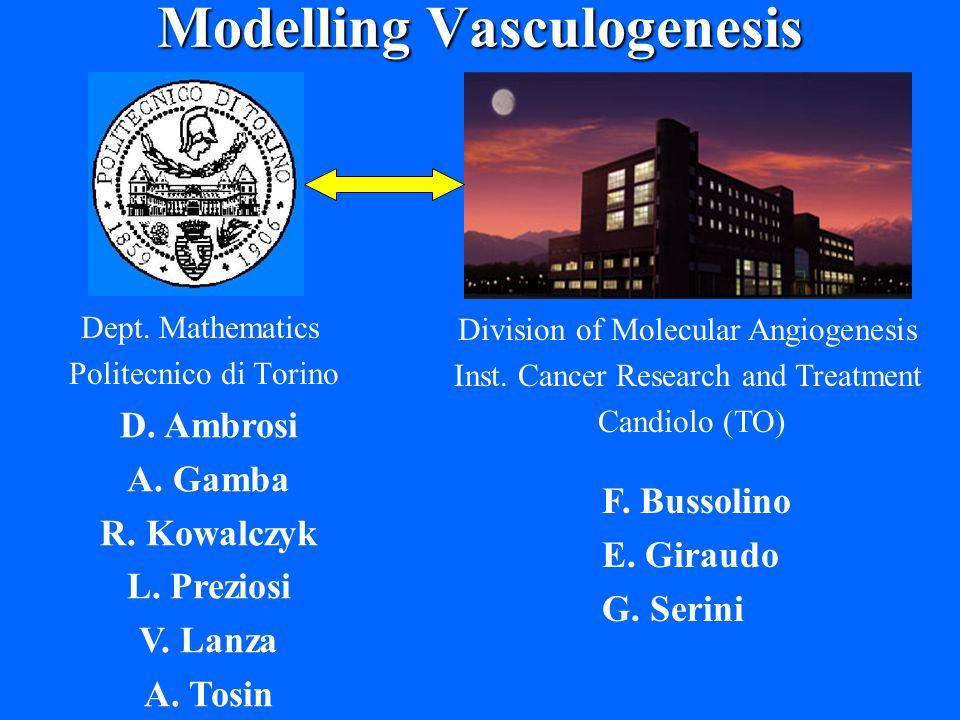 Modelling Vasculogenesis