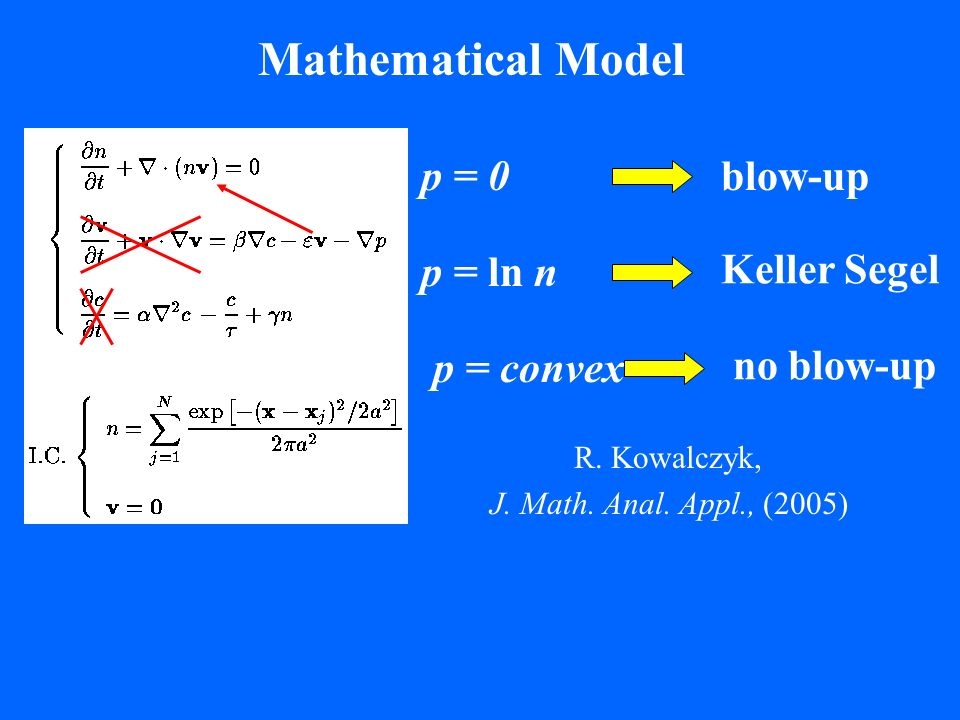 Mathematical Model blow-up p = 0 Keller Segel p = ln n no blow-up