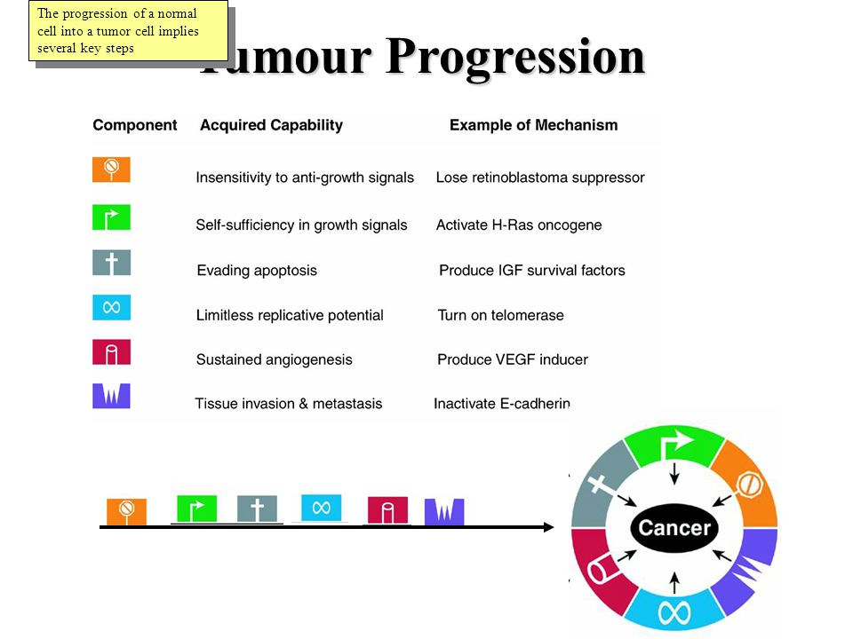 Tumour Progression The progression of a normal cell into a tumor cell implies several key steps
