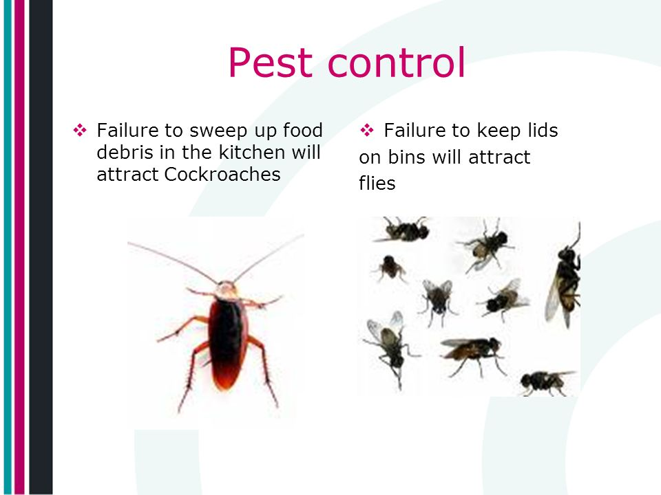Pest control Failure to sweep up food debris in the kitchen will attract Cockroaches. Failure to keep lids.
