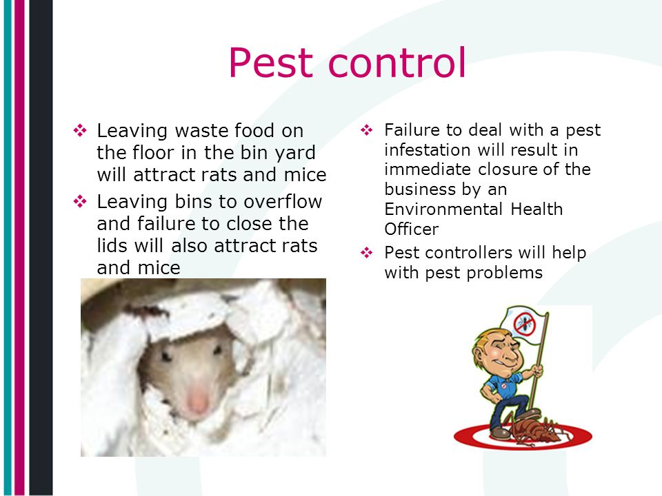 Pest control Leaving waste food on the floor in the bin yard will attract rats and mice.