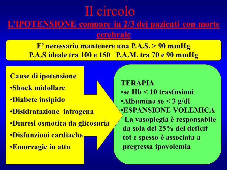 Il circolo L'IPOTENSIONE compare in 2/3 dei pazienti con morte cerebrale. E' necessario mantenere una P.A.S. > 90 mmHg.
