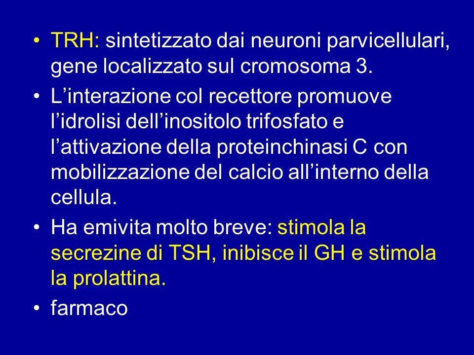 TRH: sintetizzato dai neuroni parvicellulari, gene localizzato sul cromosoma 3.
