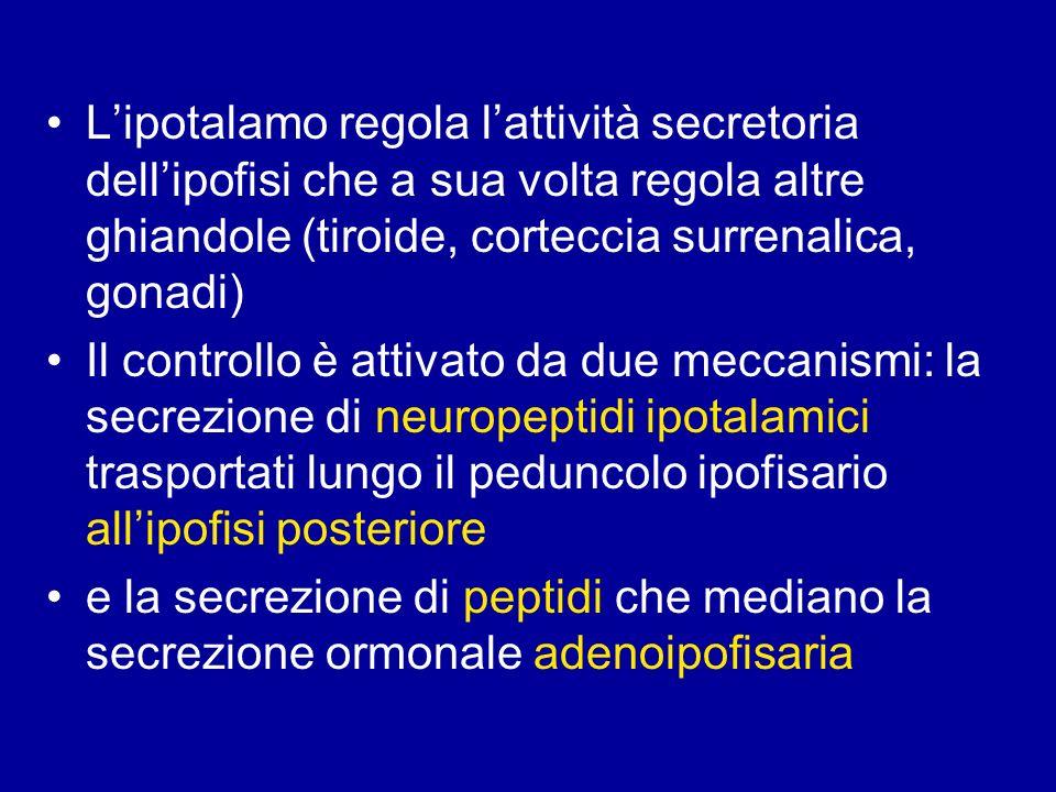 L'ipotalamo regola l'attività secretoria dell'ipofisi che a sua volta regola altre ghiandole (tiroide, corteccia surrenalica, gonadi)