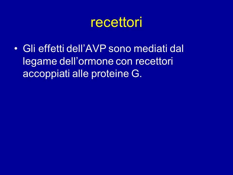 recettori Gli effetti dell'AVP sono mediati dal legame dell'ormone con recettori accoppiati alle proteine G.