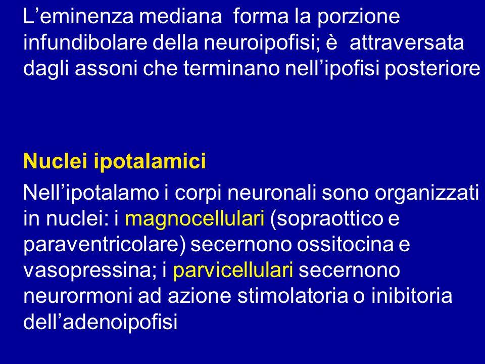 L'eminenza mediana forma la porzione infundibolare della neuroipofisi; è attraversata dagli assoni che terminano nell'ipofisi posteriore