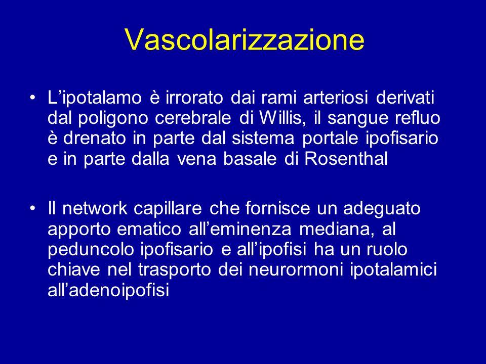 Vascolarizzazione