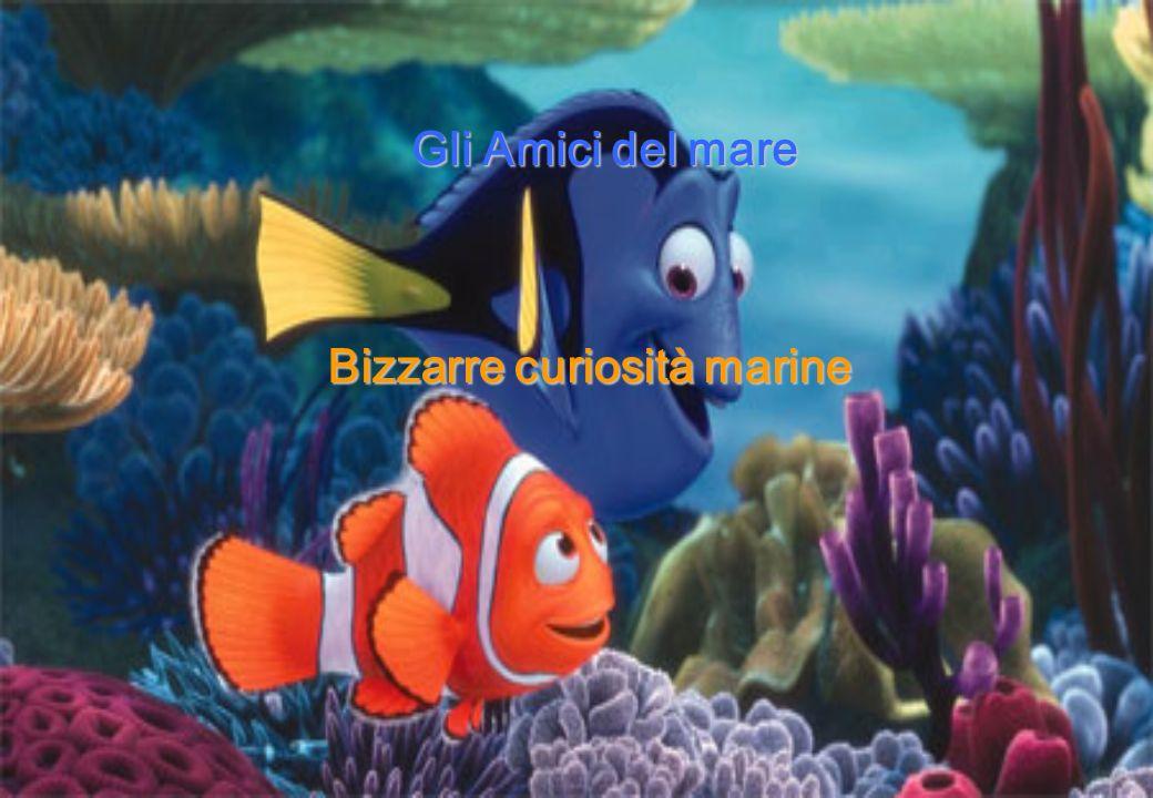 Gli Amici del mare Bizzarre curiosità marine