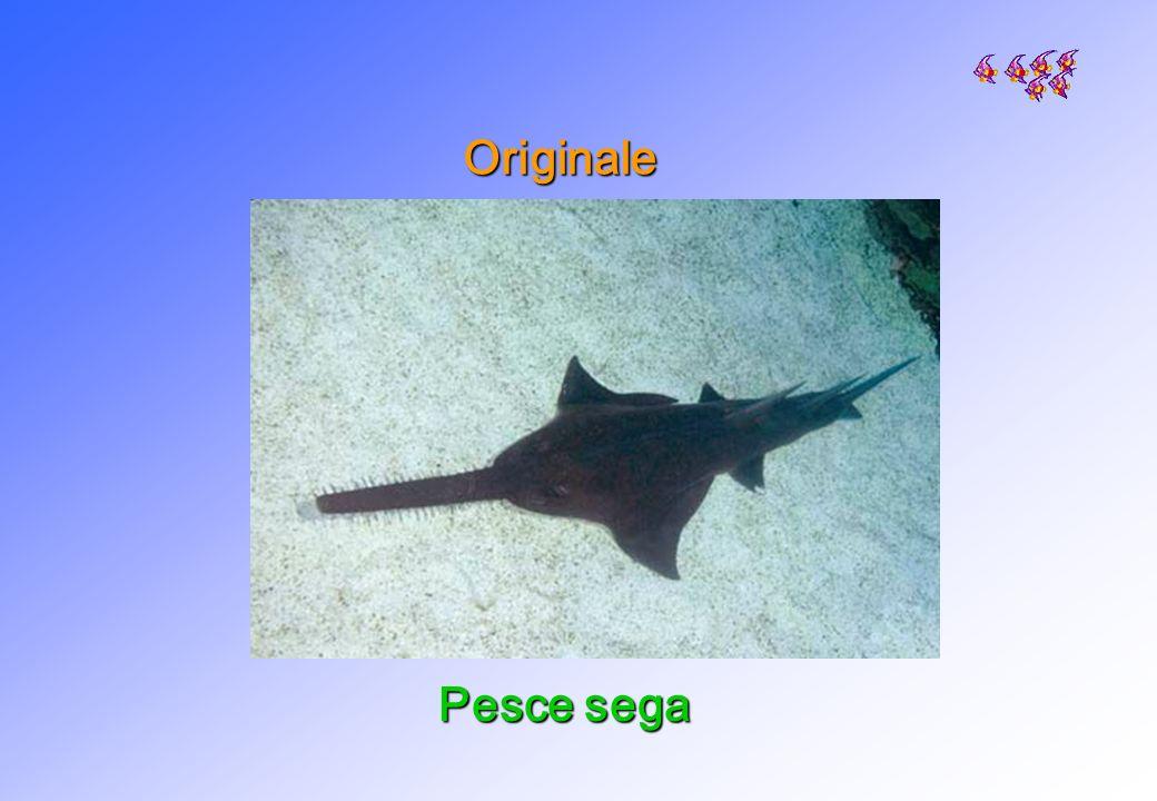 Originale Pesce sega