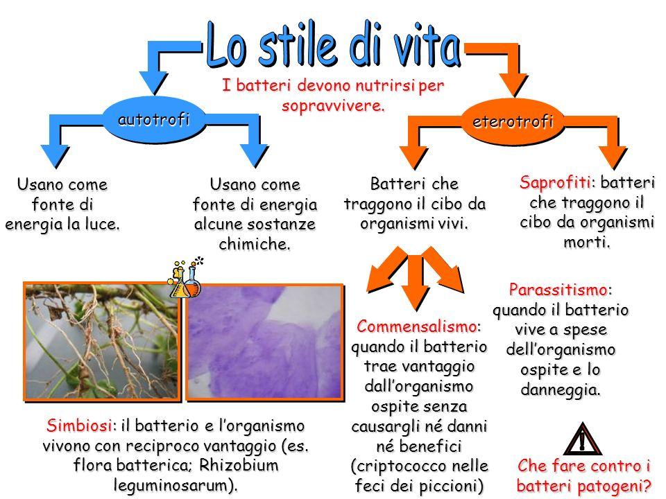 Lo stile di vita ! I batteri devono nutrirsi per sopravvivere.