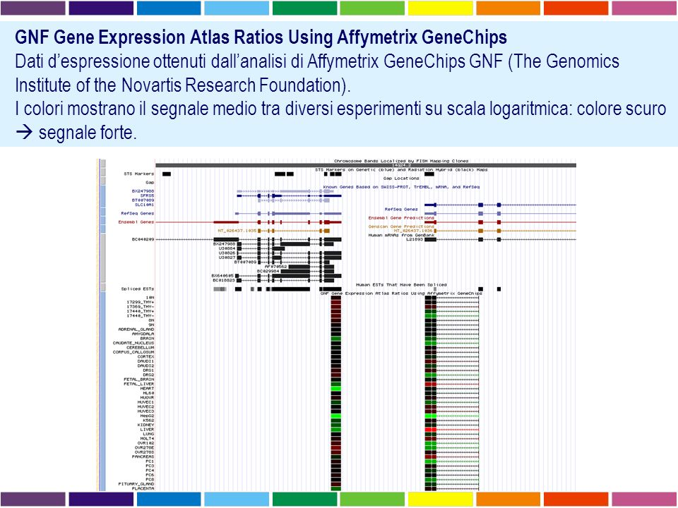 GNF Gene Expression Atlas Ratios Using Affymetrix GeneChips