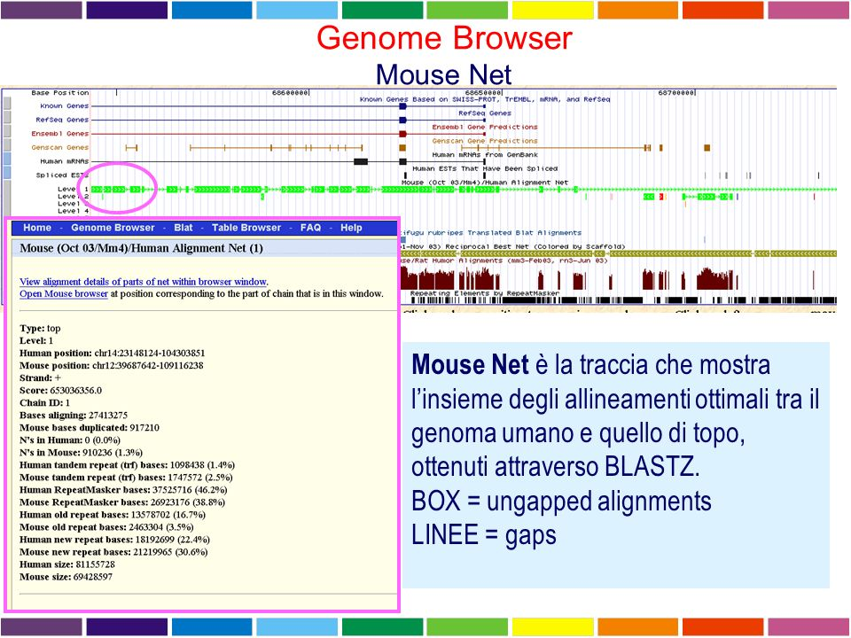 Genome Browser Mouse Net