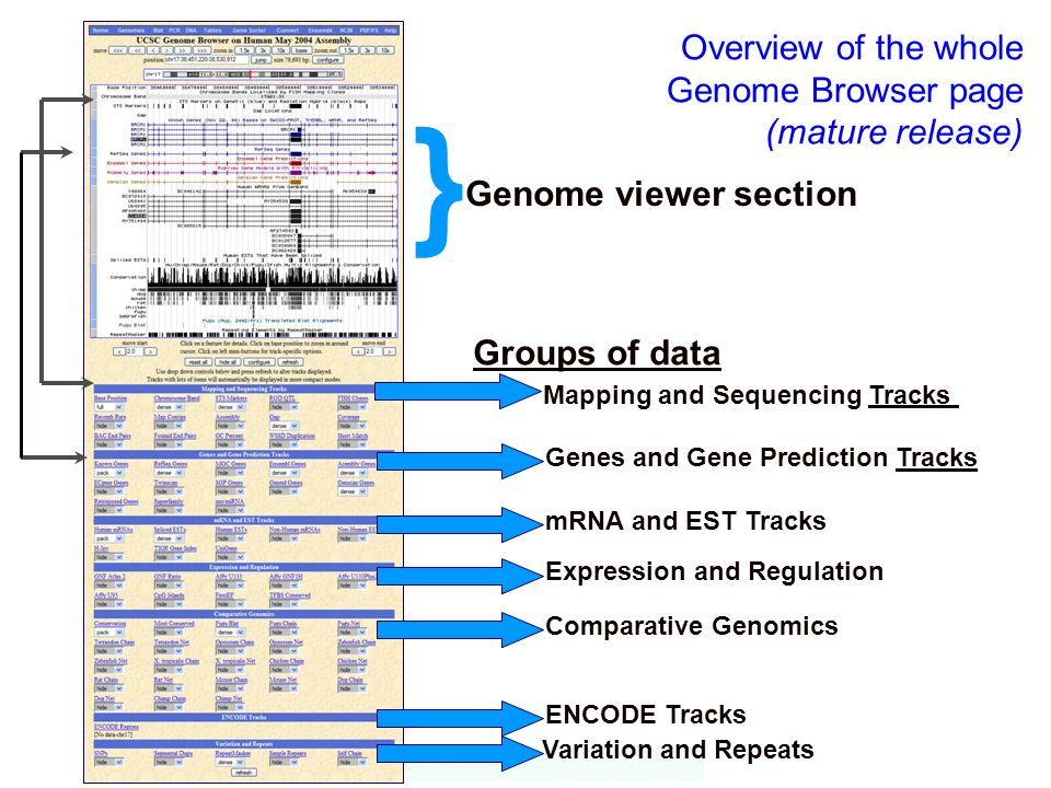 Overview of the whole Genome Browser page (mature release)