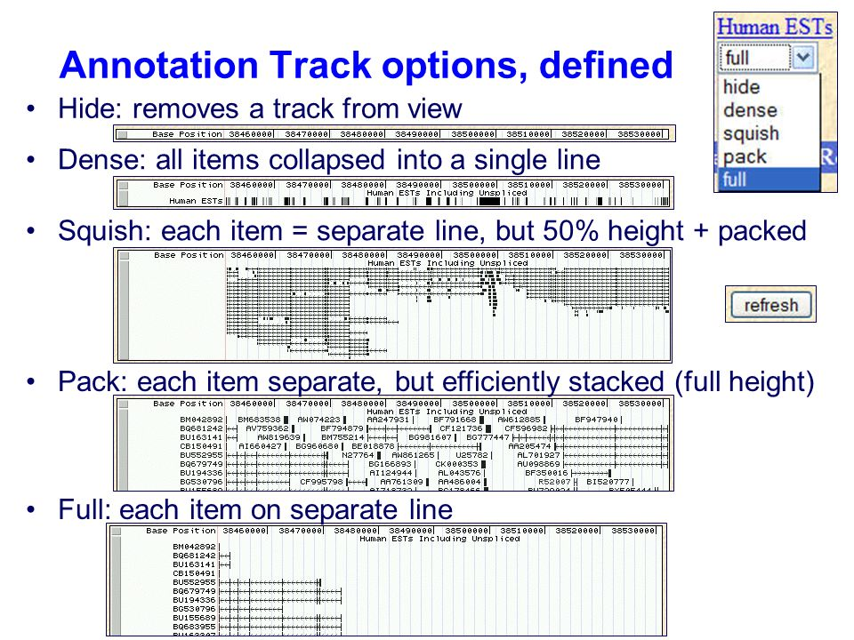 Annotation Track options, defined