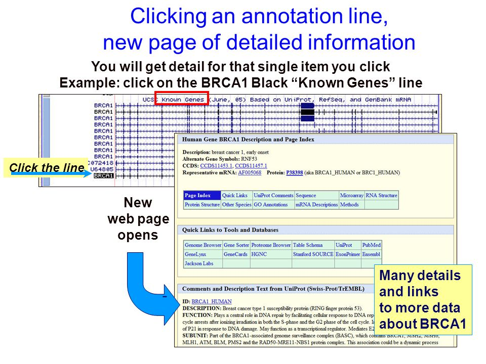 Clicking an annotation line, new page of detailed information