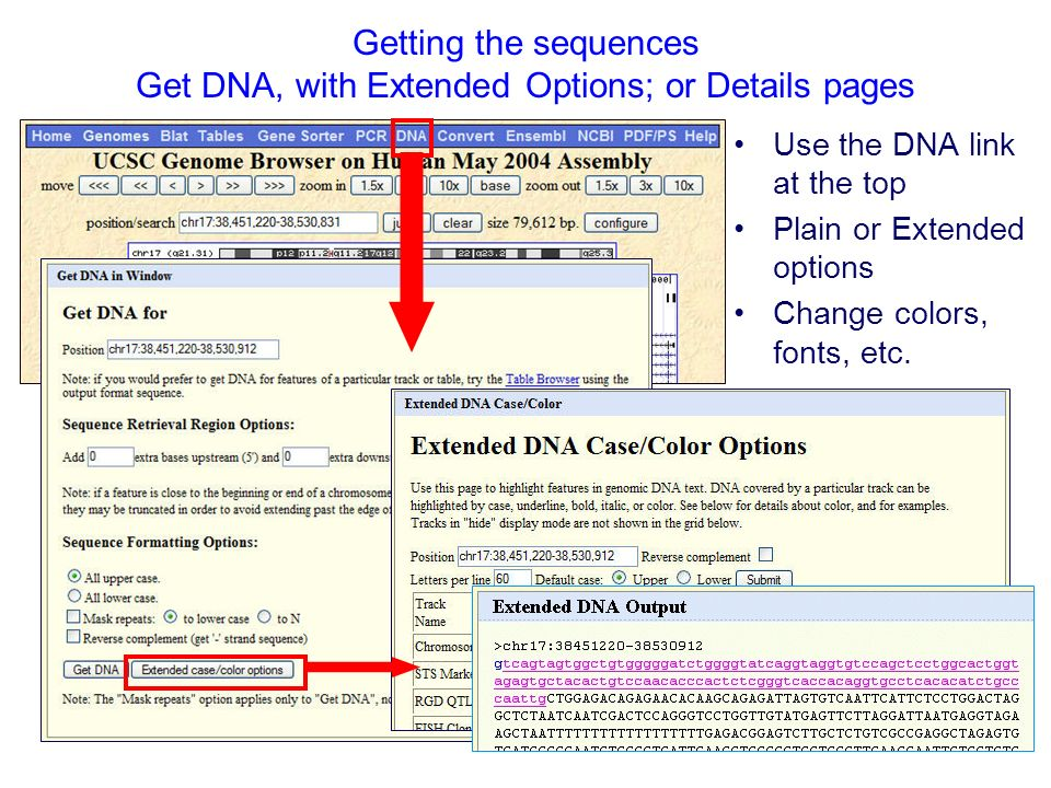 Getting the sequences Get DNA, with Extended Options; or Details pages