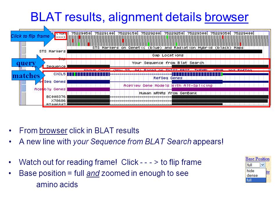 BLAT results, alignment details browser