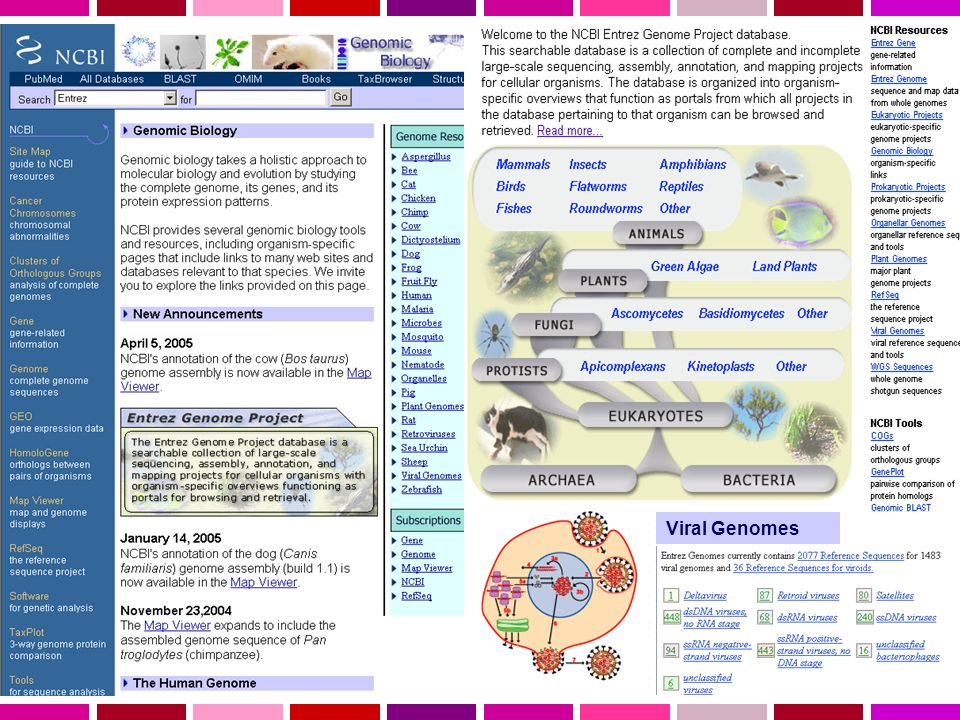 Viral Genomes