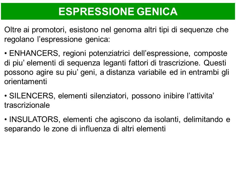 ESPRESSIONE GENICA Oltre ai promotori, esistono nel genoma altri tipi di sequenze che regolano l'espressione genica: