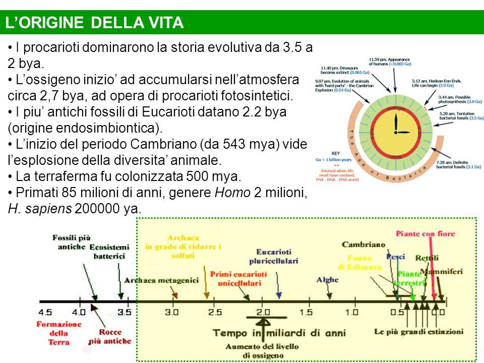 L'ORIGINE DELLA VITA I procarioti dominarono la storia evolutiva da 3.5 a 2 bya.