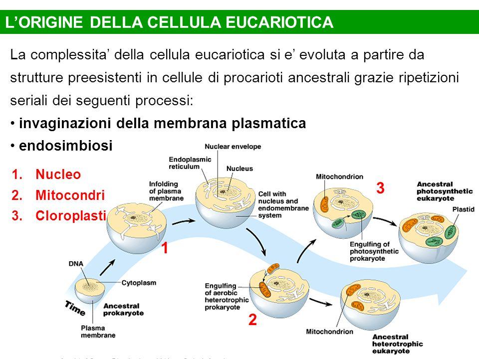 L'ORIGINE DELLA CELLULA EUCARIOTICA