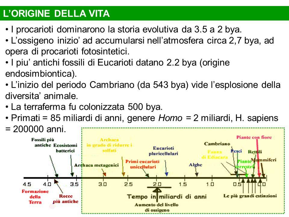 L'ORIGINE DELLA VITAI procarioti dominarono la storia evolutiva da 3.5 a 2 bya.
