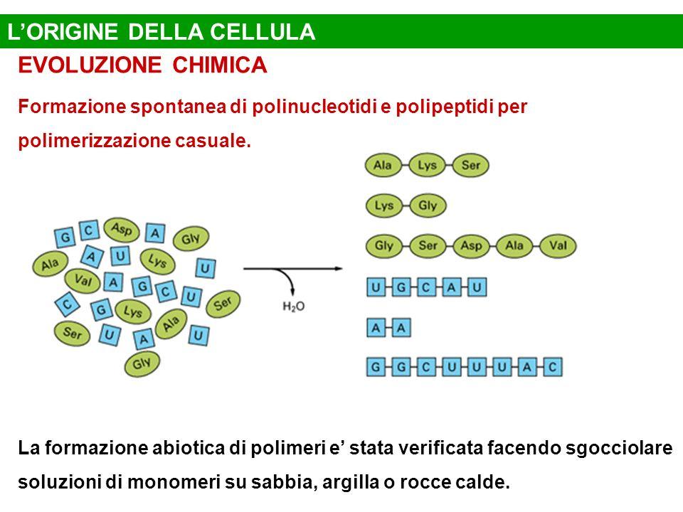 L'ORIGINE DELLA CELLULA
