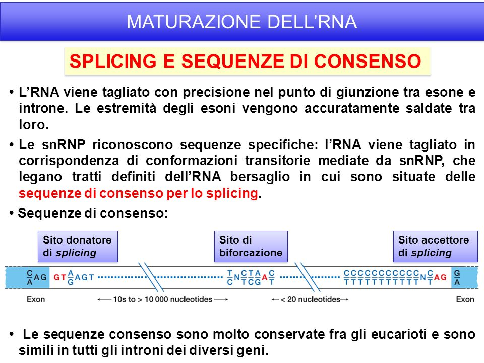 SPLICING E SEQUENZE DI CONSENSO