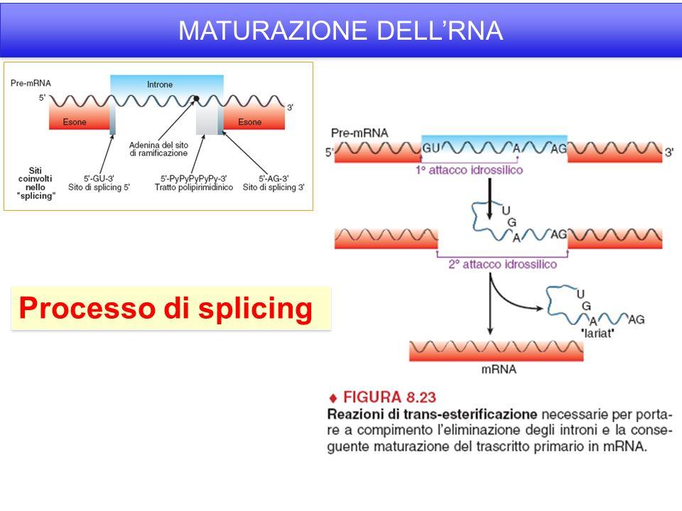 Processo di splicing MATURAZIONE DELL'RNA