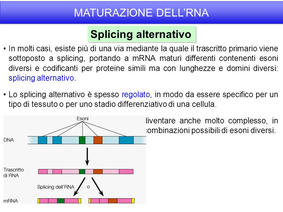 MATURAZIONE DELL'RNA Splicing alternativo