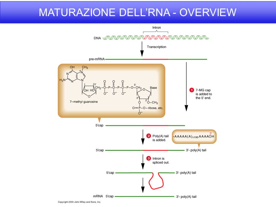 MATURAZIONE DELL'RNA - OVERVIEW