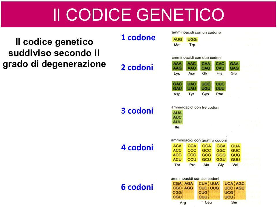 Il codice genetico suddiviso secondo il grado di degenerazione