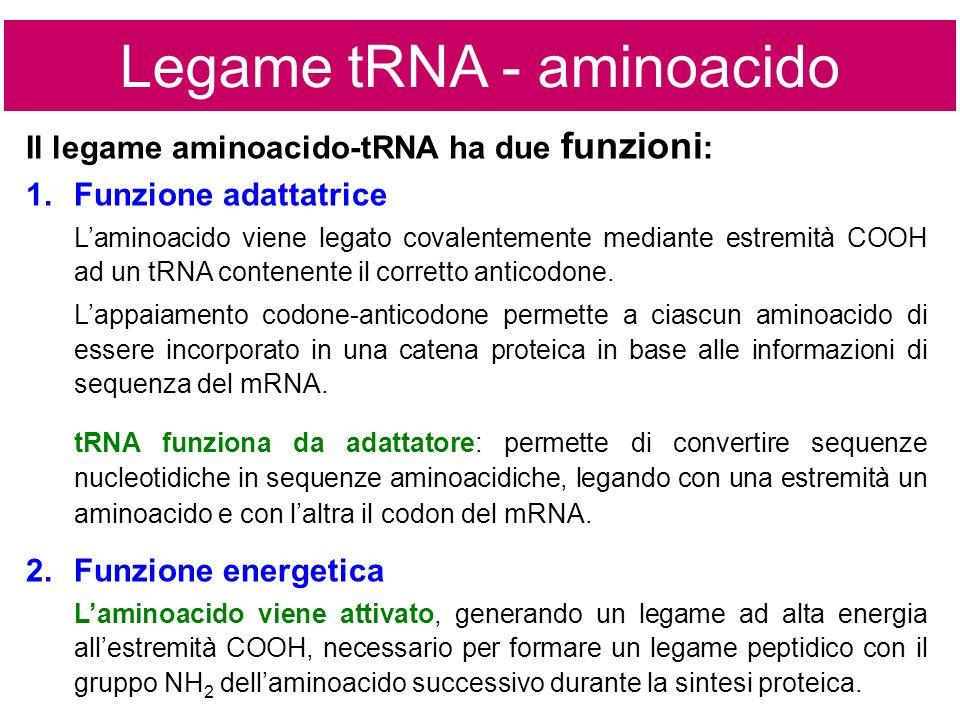 Legame tRNA - aminoacido
