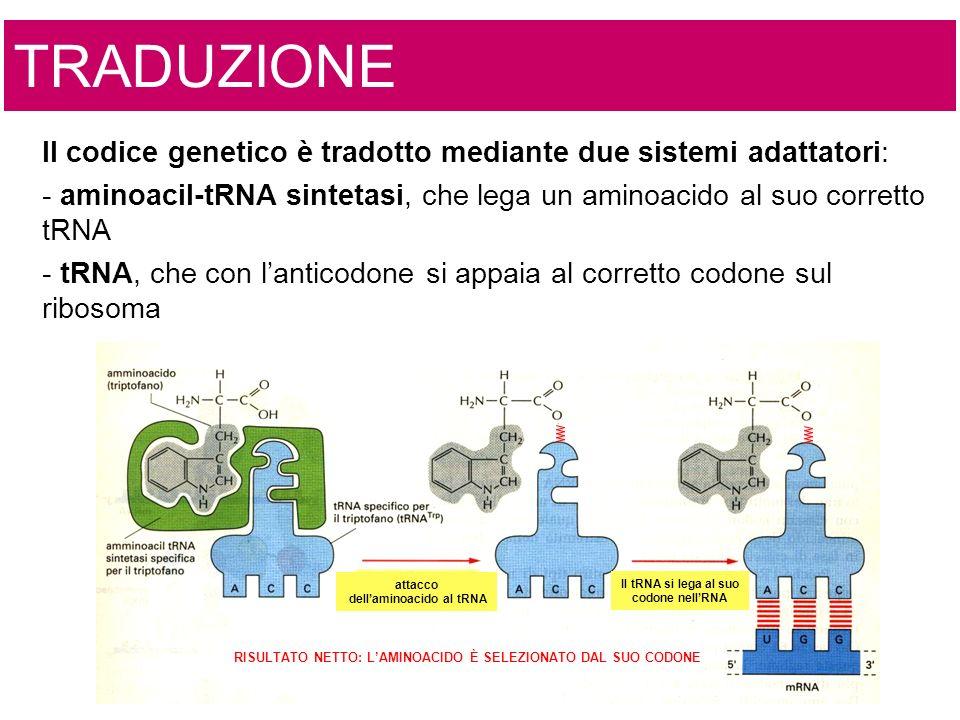 dell'aminoacido al tRNA