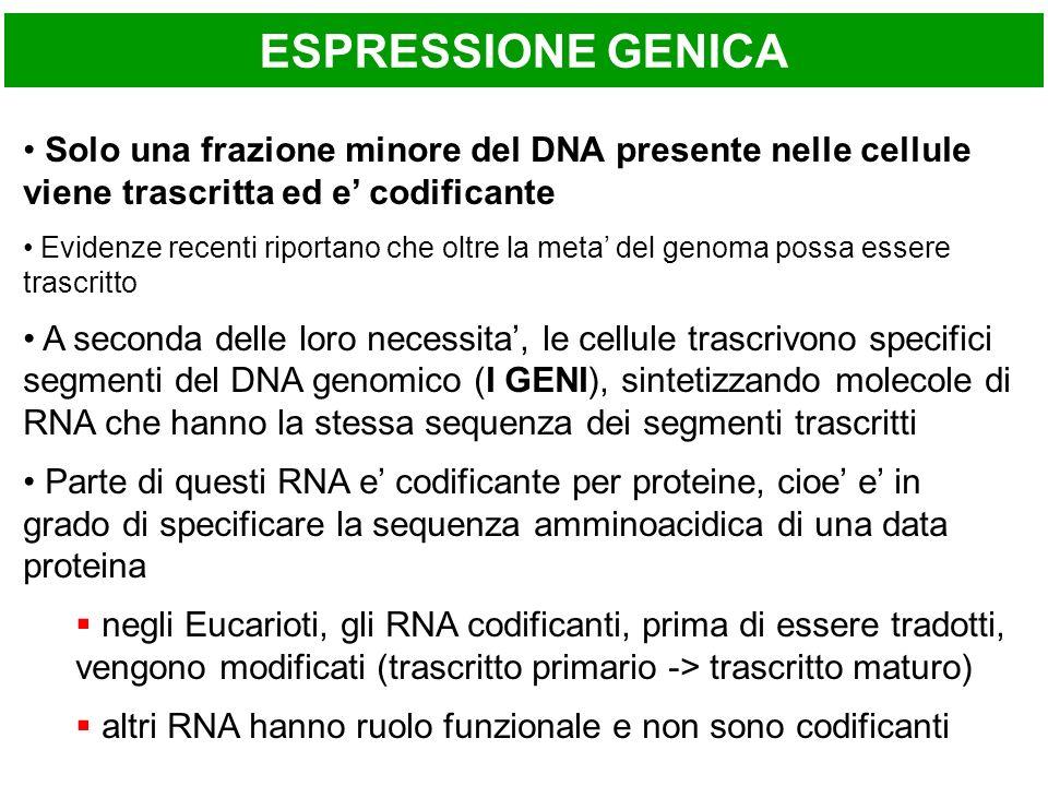 ESPRESSIONE GENICA Solo una frazione minore del DNA presente nelle cellule viene trascritta ed e' codificante.
