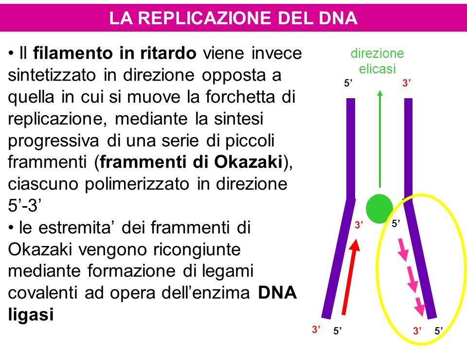 LA REPLICAZIONE DEL DNA