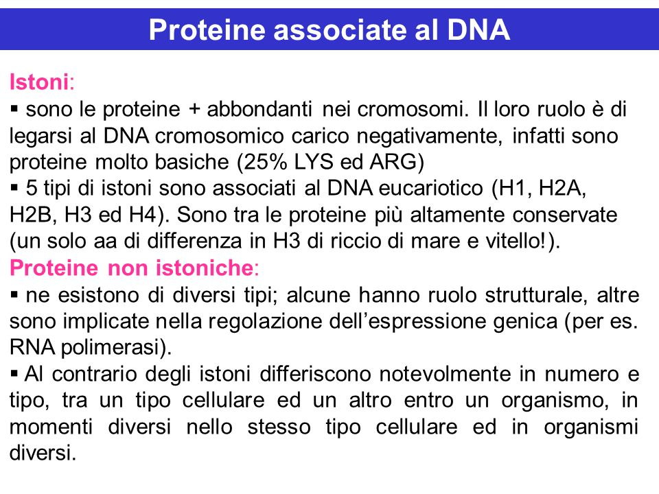 Proteine associate al DNA