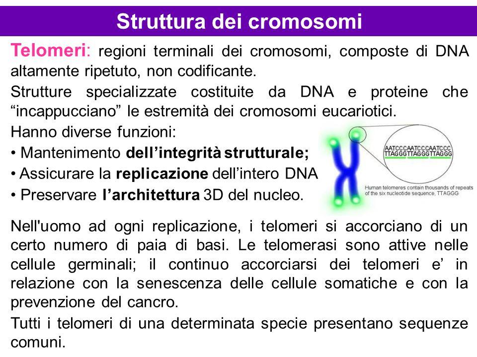 Struttura dei cromosomi