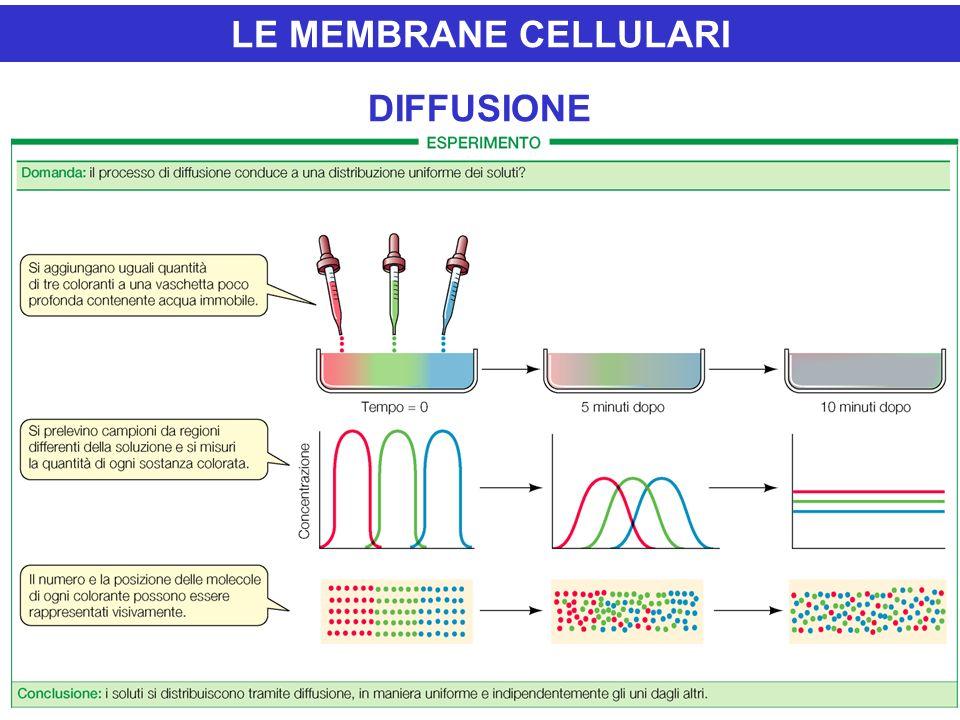 LE MEMBRANE CELLULARI DIFFUSIONE