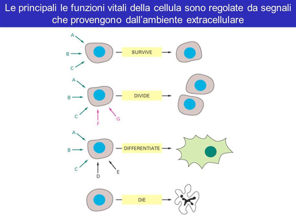 Le principali le funzioni vitali della cellula sono regolate da segnali che provengono dall'ambiente extracellulare