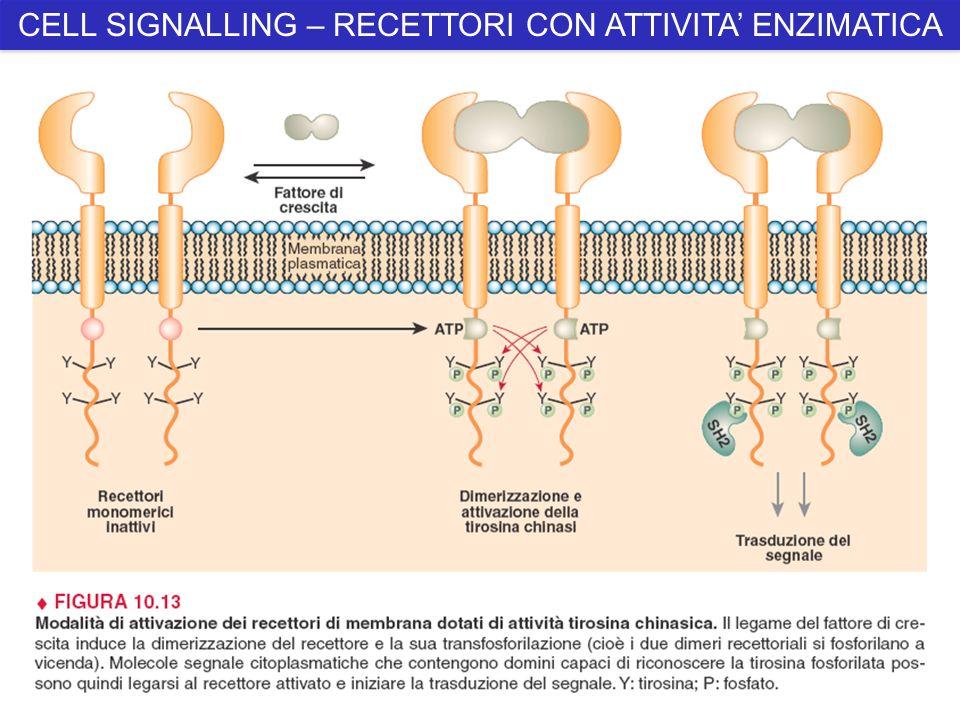 CELL SIGNALLING – RECETTORI CON ATTIVITA' ENZIMATICA