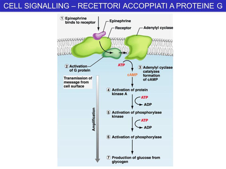 CELL SIGNALLING – RECETTORI ACCOPPIATI A PROTEINE G