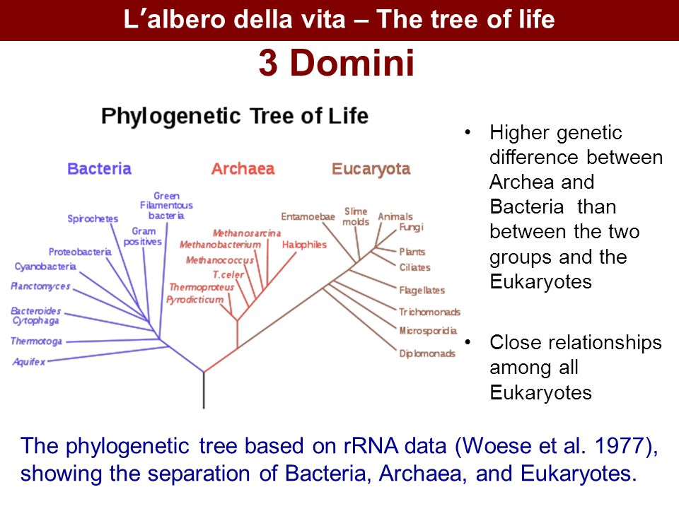 L'albero della vita – The tree of life